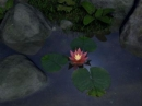 AD Water Lily - Animated Desktop Wallpaper