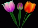 3D_Ikebana Screensaver
