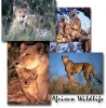 African Wildlife Screen Saver