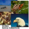 Amazing Animals 1