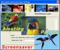 Amazing Parrots Screensaver