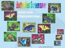 Butterflies Screensaver