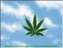 Salvapantallas sobre el cannabis (Cannabinatic Screensaver)