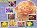 Magic Flowers Screensaver
