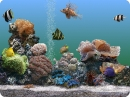 Marine Aquarium 3