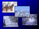 Moving Images Winter Scenes