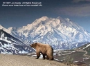 Wonders of Denali National Park