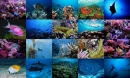 Ocean Life Photo Screensaver