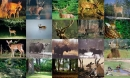 Deer Photo Screensaver