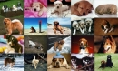 Dogs Photo Screensaver