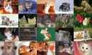 Cats Photo Screensaver