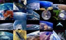 Planet Photo Screensaver