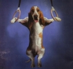 My Basset Hound Screen Saver