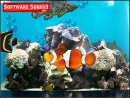Aquarium Screensaver by Server Connectix