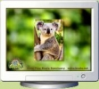 Koala Screen Saver