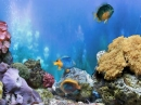 FP :: Amazing 3D Aquarium ADD-on  :: Chrysiptera - Fish Pack