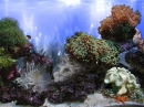 AR :: Amazing 3D Aquarium ADD-on  ::  Coral Landscape-1