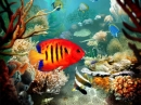 Tropical Fish 3D Screensaver (Protector de Pantallas de Peces Tropicales en 3 Dimensiones) (Tropical Fish 3D Screensaver)