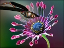 Jeweled Dragonfly 3D Screensaver