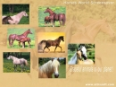 Horses World Screensaver