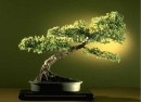 Bonsai Gallery Screensaver Collection