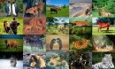 Animals Photo Screensaver Volume 1