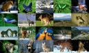 Animals Photo Screensaver Volume 2