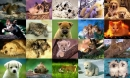 Animals Photo Screensaver Volume 3