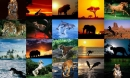 Animals Photo Screensaver Volume 5