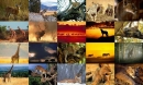 Animals Photo Screensaver Volume 4
