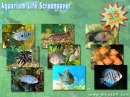 Aquarium Life Screensaver