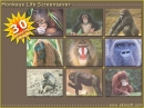 Monkeys Life Screensaver