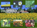 Vegetable Life Screensaver