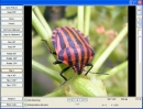 GDViewer Pro OCX - Visor de Im�genes ActiveX (GdViewer Pro OCX - Image Viewer ActiveX)