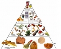 Food Pyramid Animated Diete Screen Saver