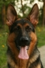 Popular Dog Breeds Screensaver