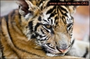 Animals Screensaver EV - Salvapantallas de Animales EV (Animals Screensaver EV)