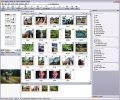 ACDSee 8 Photo Manager