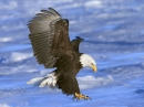 Birds of Prey Free Screensaver