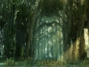 Dark Forest Animated Wallpaper
