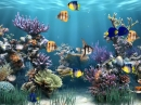 Aquarium Animated Wallpaper (Aquarium Animated Wallpaper)