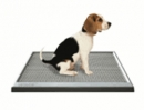Toilet Training Puppies - Puzzle