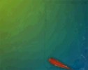 Animated Fish Desktop Wallpaper