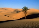 Desert Screensaver