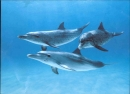 Salvapantallas de Delfines. (Dolphin Screensavers)