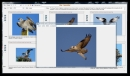 Bird Image Library