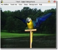 AV Digital Talking Parrot. (AV Digital Talking Parrot)