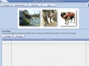 Dog Life Jacket Guide Theme Maker