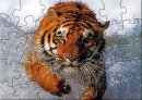 CCB Tiger Puzzle