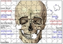 Human Skull Puzzle